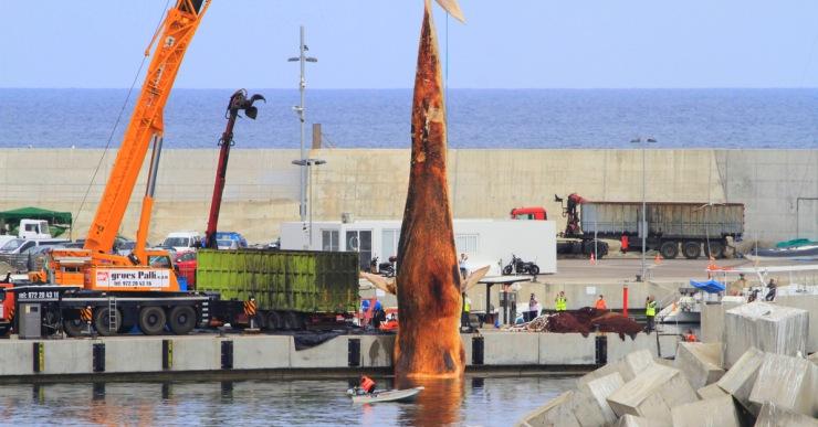 La balena trobada a Lloret finalment s'ha traslladat a l'abocador del municipi