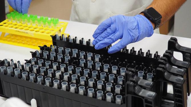 Mostres de PCR
