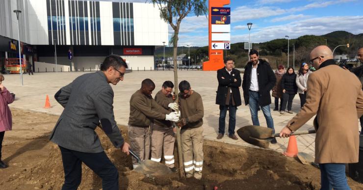 Aspronis i l'Ajuntament fan una replantada d'arbres simbòlica per commemorar els 50 anys de la Fundació
