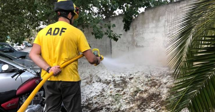 L'ADF du a terme la campanya anual per eliminar el borrissol del pollancre