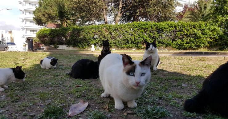 Les persones que tinguin cura de les colònies de gats tindran un carnet identificatiu