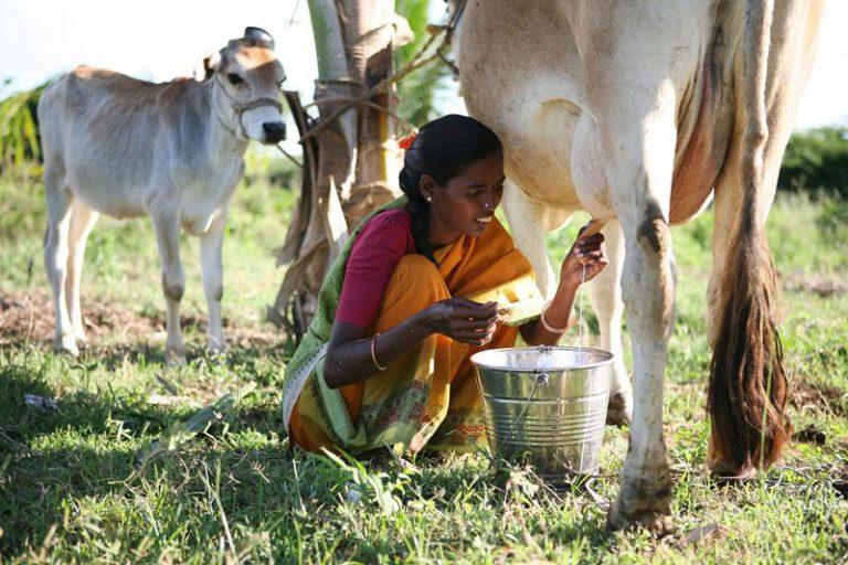 Set dones que trenquen les estructures patriarcals de l'Índia rural