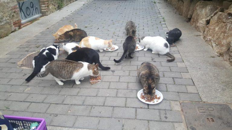 APASC informarà dels passos a seguir per obtenir el carnet d'alimentador de gats