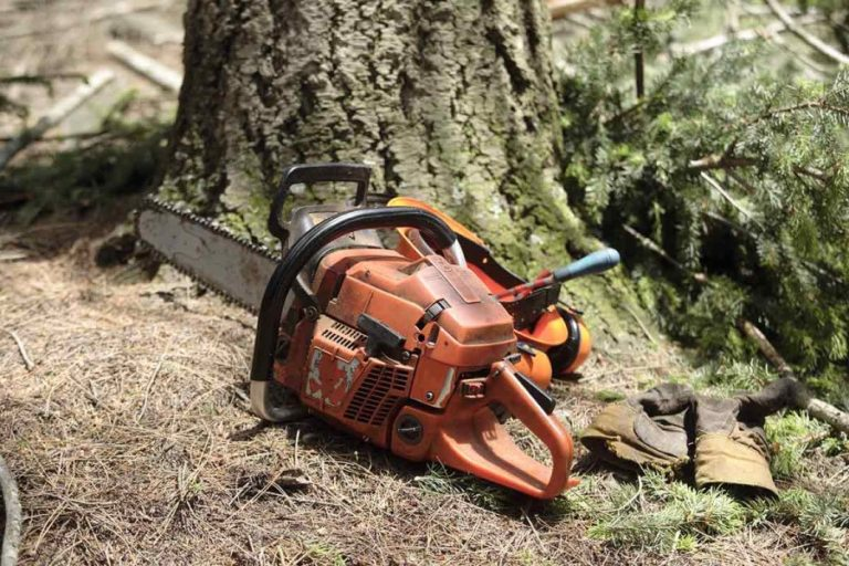 El SOM organitza un curs de formació en treball forestal