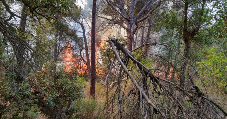 Controlat l'incendi que crema des d'aquest matí a la urbanització Roca Grossa