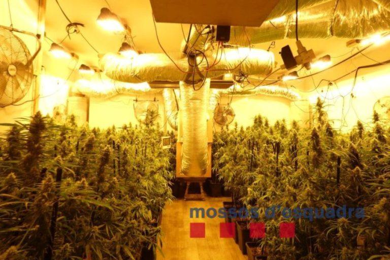 Dos detinguts per cultivar marihuana en una masia de Lloret de Mar