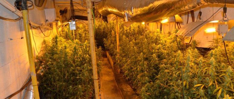 Desmantellen a Lloret i Riudarenes un grup criminal dedicat al cultiu de marihuana