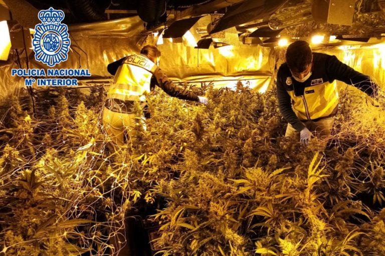 La Policia Nacional desmantella dos cultius de marihuana a Serra Brava
