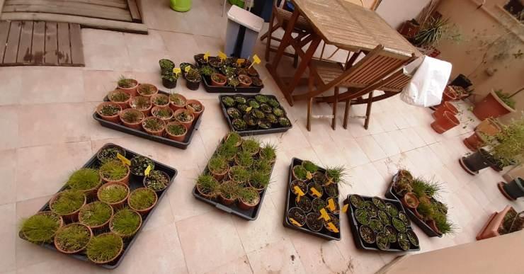 El biòleg Miquel Ribas-Carbó ha hagut d'endur-se les plantes d'una investigació a casa pel confinament